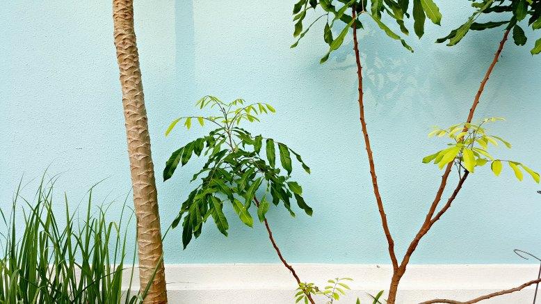 palms on teal.jpg